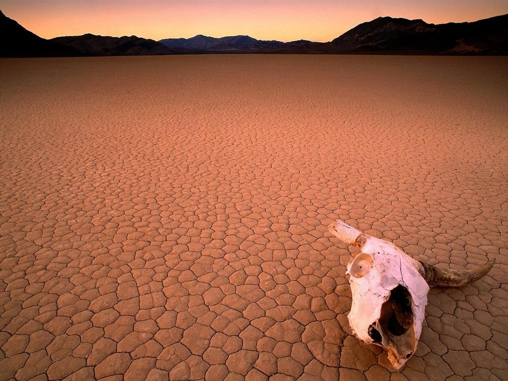 desert_drought_skull
